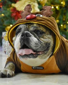 ropa de navidad para perros, saco de reno para perro Bulldog ingles navidad