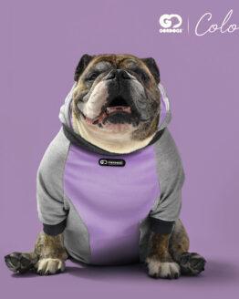 saco para perros ROPA PARA PERROS BULLDOG INGLES Bulldog ingles.jpg