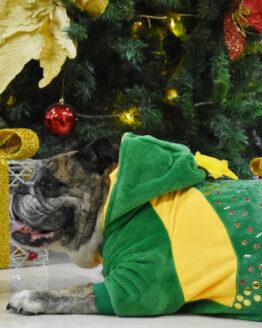 ropa de navidad para perros, saco de arbol navideño para perro Bulldog ingles navidad