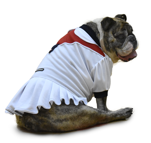 bulldog athletic dress