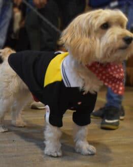 Camiseta para perro gordogs athletic polo negra combinada todas las tallas