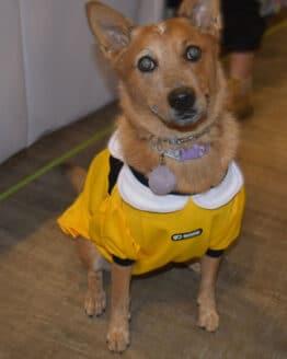 vestido faldita amarillo combinado para perro gordogs