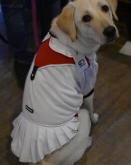 vestido faldita blanco combinado para perro gordogs
