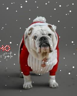 Saco o sweater de papá noel para perros, santa ropa para perro de navidad