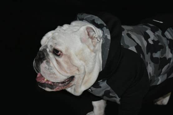 ropa para perro, Buzo, Saco, hoodie camuflado para perros bulldogs army gris