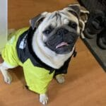 Chaquetas impermeables By Any Dog face photo review