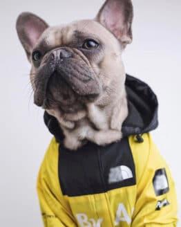 Chaquetas mascota Ropa de perro de moda amarilla Bulldog francés Pupreme camisa perro Camo rompevientos deporte Retro Sudadera con capucha para perro mascotas ropa_Abrigos y chaquetas para perro_