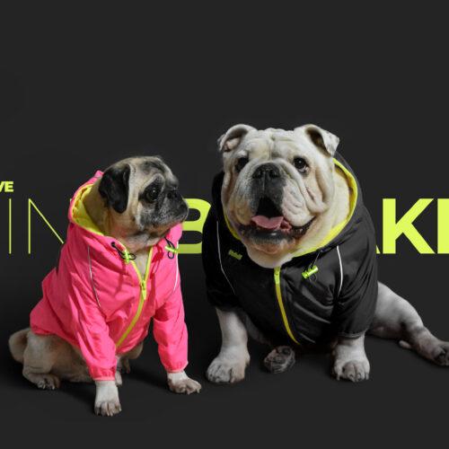 Bulldog ingles y pug con Chaqueta rompevientos reflectiva neon marca gordogs para perros siete tallas