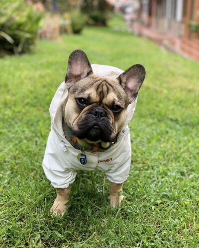 Chaqueta Reflectiva Astrodog Nasa photo review
