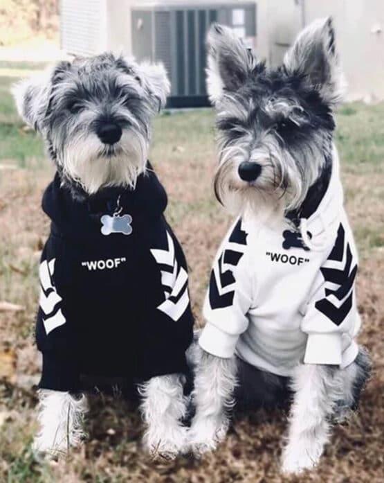 Bulldog frances con saco de capota Woof Gordogs ropa y accesorios para mascotas peroros pequeños y medianos