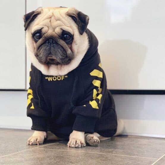 Bulldog frances con saco de capota Woof Gordogs ropa y accesorios para bulldogs