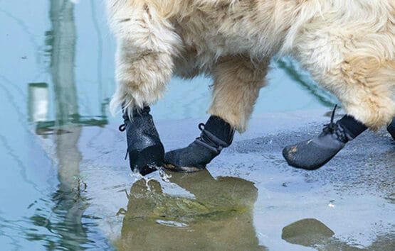 Zapatos para perro premium Gordogs