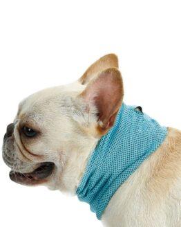 bulldog frances con pañoleta para perro, bandana de enfriamiento o pañoleta refrigerante para perro
