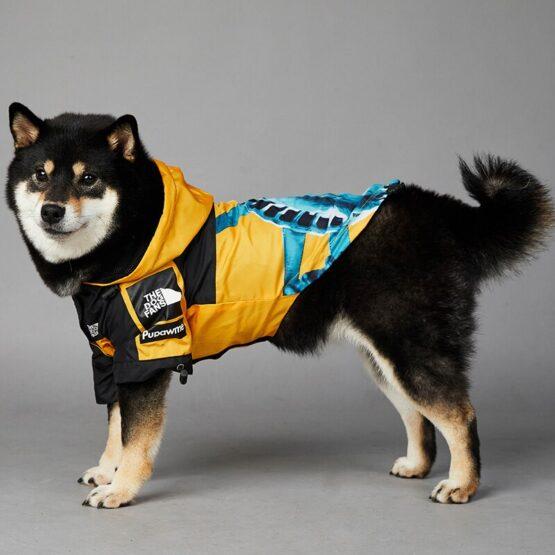chaqueta para perro gordogs